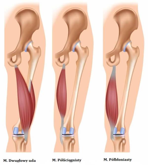 Grupa mięśni kulszowo-goleniowych