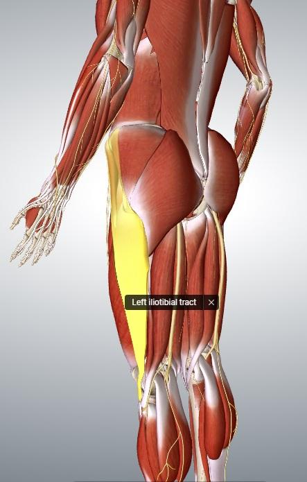 Pasmo biodrowo-piszczelowe - stabilizacja boczna miednicy oraz kolana